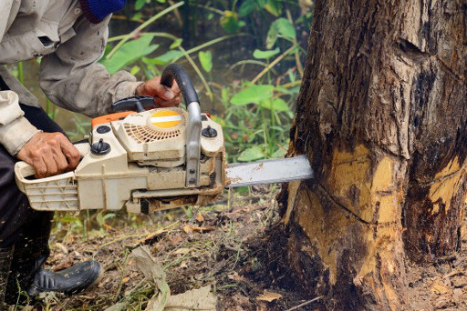 Tree Surgeon Stonegravels  24 Hr Tree Removal And Other Tree Work