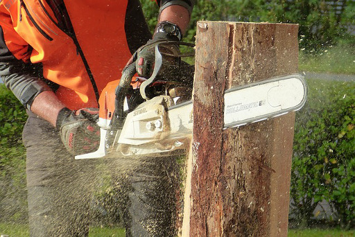 Tree Surgeon Wilford Providing Tree Surgery Tree & Stump Removal And Other Tree Services
