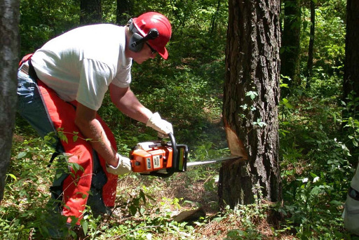 Professional Tree Surgeon - Tree Pruning Services All Over The Foxton Area
