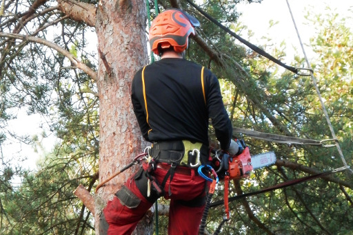 Tree Removal And Trimming Services Skegness Residential And Commercial