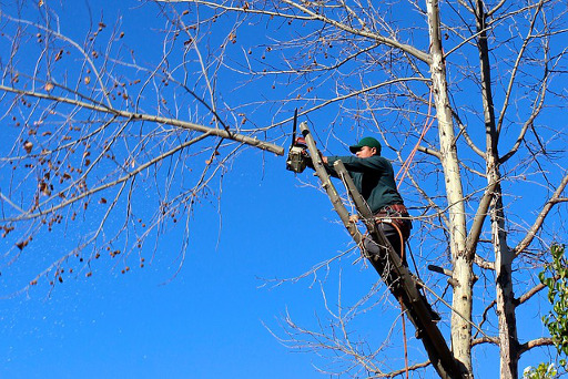 Experienced Tree Removal Dismantling And Tree Felling Throughout Brentingby