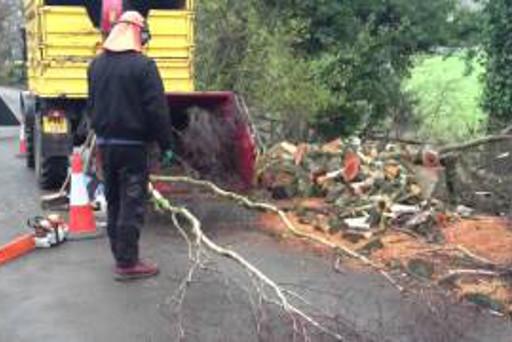 Tree Contractors Thorneywood Residential And Commercial Tree Removal Services