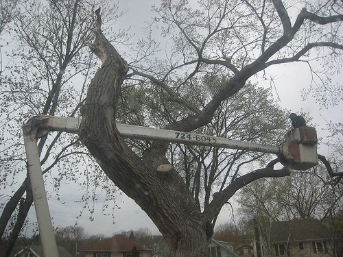 Tree Cutting Service Grantham