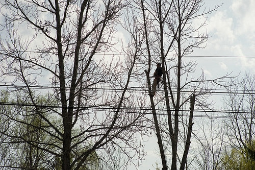 Tree Cutting Service Spalding