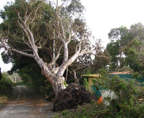 Emergency tree surgey Market Deeping