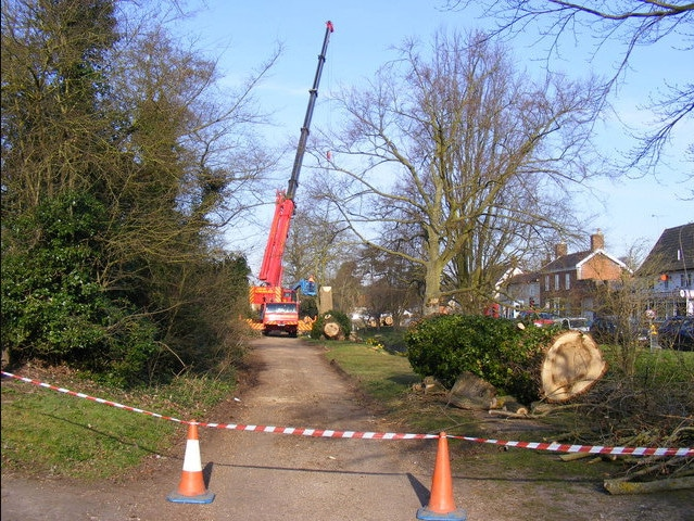 Tree Removal Grimsby